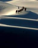 Siluetta del caravan del cammello Fotografia Stock