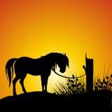 Siluetta del cavallo Immagine Stock