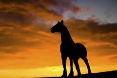 Siluetta del cavallo Fotografia Stock Libera da Diritti