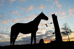 Siluetta del cavallo Fotografie Stock Libere da Diritti