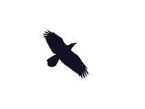 Siluetta del corvo Fotografia Stock