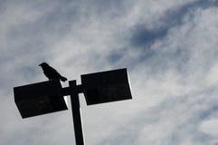 Siluetta del corvo Immagini Stock Libere da Diritti