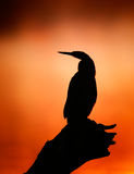 Siluetta del Darter con alba nebbiosa fotografia stock libera da diritti
