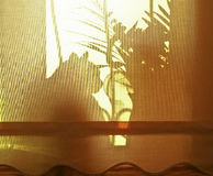 Siluetta del gatto e delle piante domestiche Fotografie Stock
