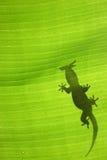 Siluetta del Gecko Fotografie Stock Libere da Diritti