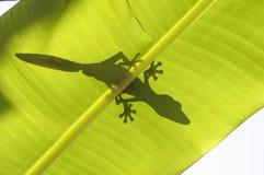 Siluetta del Gecko sul foglio Fotografie Stock