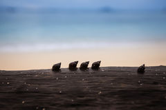 Siluetta del gruppo della lumaca dell'allineamento che cammina sul legname sulla spiaggia Fotografia Stock