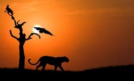 Siluetta del leopardo Immagini Stock