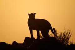 Siluetta del leopardo Fotografia Stock