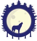 Siluetta del lupo che urla alla luna piena nella foresta fotografia stock libera da diritti