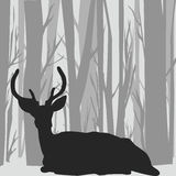 Siluetta del maschio dei cervi nel paesaggio della foresta Fotografie Stock Libere da Diritti