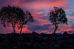 Siluetta del nero dell'albero di tramonto di sera della foto. Immagini Stock