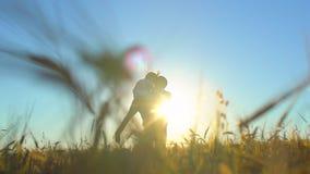 Siluetta del padre e del figlio che giocano e che godono del tramonto nel giacimento di grano in natura il giorno di estate Cammi stock footage