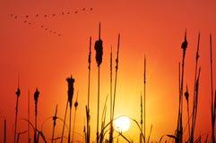 Siluetta del pascolo e della canna al tramonto Immagini Stock Libere da Diritti