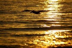 Siluetta del pellicano di volo Fotografie Stock