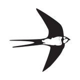 Siluetta del profilo dello Swallow Immagine Stock