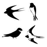 Siluetta del profilo dello Swallow Fotografia Stock Libera da Diritti