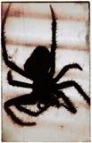 Siluetta del ragno Fotografia Stock Libera da Diritti
