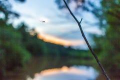 Siluetta del ragno contro il tramonto del lago Immagine Stock Libera da Diritti