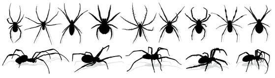 Siluetta del ragno nero Fotografia Stock