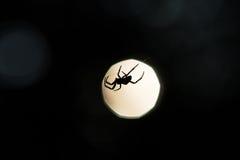 Siluetta del ragno su un web immagine stock