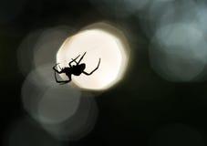 Siluetta del ragno su un web Fotografia Stock Libera da Diritti