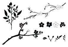 Siluetta del ramo del ciliegio Fotografie Stock Libere da Diritti