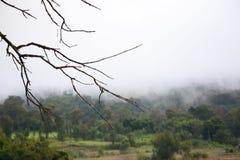 Siluetta del ramo di albero Fotografia Stock