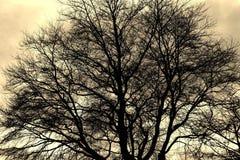 Siluetta del ramo di albero Immagini Stock Libere da Diritti