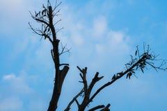 Siluetta del ramo di albero Immagini Stock