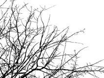 Siluetta del ramo di albero Fotografie Stock Libere da Diritti