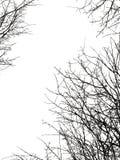 Siluetta del ramo di albero Fotografia Stock Libera da Diritti