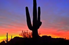 Siluetta del Saguaro Immagini Stock Libere da Diritti