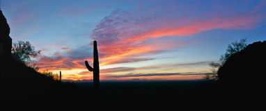 Siluetta del Saguaro Fotografie Stock