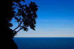 Siluetta dell'albero Fotografie Stock Libere da Diritti