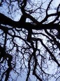 Siluetta dell'albero Immagine Stock Libera da Diritti