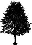 Siluetta dell'albero Fotografia Stock