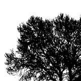Siluetta dell'albero Immagini Stock Libere da Diritti