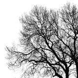 Siluetta dell'albero Immagine Stock