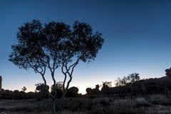 Siluetta dell'albero Fotografia Stock Libera da Diritti