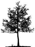 Siluetta dell'albero. Fotografia Stock Libera da Diritti