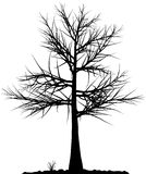 Siluetta dell'albero. Immagine Stock Libera da Diritti
