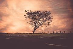 Siluetta dell'albero al tramonto Fotografie Stock Libere da Diritti