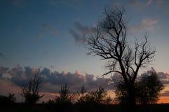 Siluetta dell'albero al tramonto Fotografia Stock