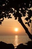Siluetta dell'albero al tramonto Immagini Stock