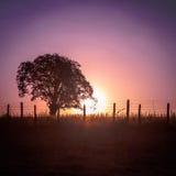 Siluetta dell'albero al tramonto Immagini Stock Libere da Diritti