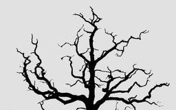 Siluetta dell'albero asciutto nel parco di fondo bianco fotografie stock