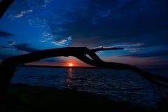 Siluetta dell'albero caduto nel lago al tramonto immagine stock libera da diritti