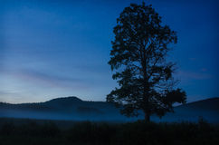 Siluetta dell'albero con arrivar a fiumie della nebbia immagini stock libere da diritti