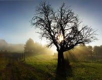 Siluetta dell'albero con i raggi del sole Fotografie Stock Libere da Diritti